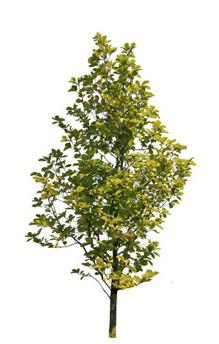 tree_s.jpg
